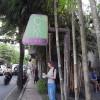 ウブドで人気のローフードカフェ、Clear Cafeで必ず食べたい一品はこちら