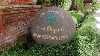 【ウブド】オーガニックカフェ、サリオーガニック(sari organik)への行き方!