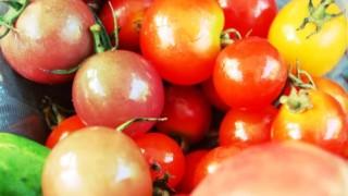 たかがトマト缶のアンチエイジング的選び方とは?