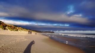 ダニーデンの感動的に美しいビーチを紹介します!